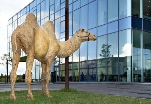 Parkeret kamel