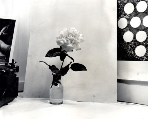 Rosen som bilde og forestilling